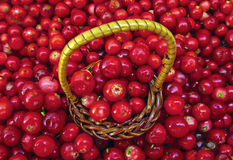 Basket of Cowberries Stock Photography