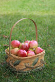 Basket of Crabapples. On summer grass Royalty Free Stock Photo