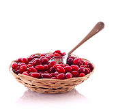 Basket of cranberries Stock Image