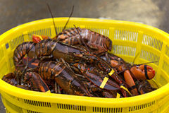 Basket of crawdads stock photo