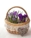 Basket with   crocuses and    heart Stock Photos