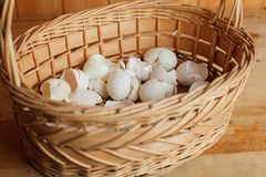 Basket of crushed egg shell Stock Photos