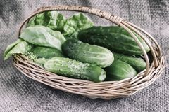 Basket of cucumbers on linen fabric. On a linen cloth represented the young green cucumbers in a wicker basket royalty free stock images