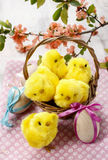 Basket of cute easter chickens Royalty Free Stock Photography