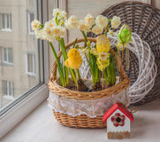 Basket with daffodils decorated Easter decor Royalty Free Stock Image