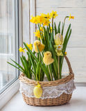 Basket with daffodils decorated stickers chickens and eggs Royalty Free Stock Images