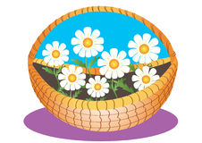 Basket of daisy flowers Royalty Free Stock Photo