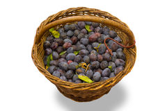 Basket of damson plums Royalty Free Stock Photo