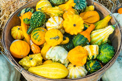 Basket of decorative gourds on display Royalty Free Stock Image