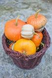 Basket of decorative pumpkins (Cucurbita pepo) Royalty Free Stock Image
