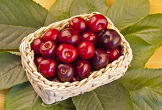 Basket of delicious cherries Royalty Free Stock Images