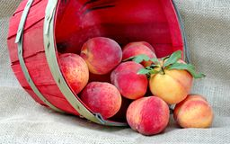 Basket of Delicious Fresh Peaches Stock Images