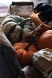 Basket with different kinds of pumpkins. Fresh harvest of pumpkins. Royalty Free Stock Image