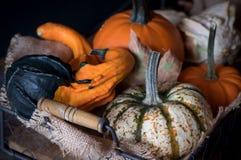 Basket with different kinds of pumpkins. Fresh harvest of pumpkins. Stock Photos