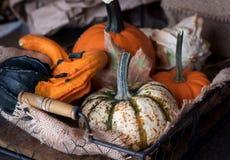 Basket with different kinds of pumpkins. Fresh harvest of pumpkins. Stock Images