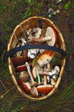 Basket of different mushrooms. Basket full of different mushrooms seen from straight above Royalty Free Stock Photo