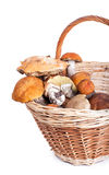 Basket with different mushrooms from forest Royalty Free Stock Images