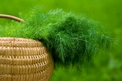 Basket with dill Stock Images