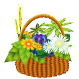Basket with drag plants Stock Photos