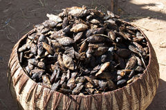Basket of dried fish. Dried fish caught in the River Niger in Mali (Acrica Stock Images