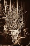Basket Dried Twigs Royalty Free Stock Photos