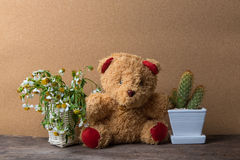 Basket of dry flowers and a teddy bear with pots of cactus  on wooden table with old brown Stock Image