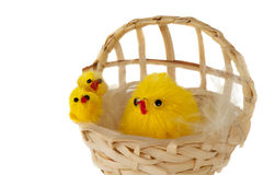Basket with Easter chicks Royalty Free Stock Images