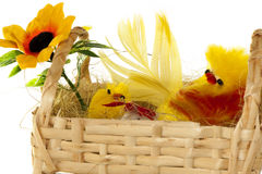 Basket with Easter chicks Royalty Free Stock Photography
