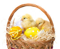 A basket with easter eggs and chickens Stock Photography