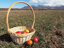 Basket with Easter Eggs. Basket with colorful Easter eggs left on the ground, field with sprouting crops, mountain hills in the distance Royalty Free Stock Photos