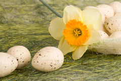 Basket with easter eggs and daffodil Stock Photography
