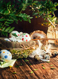 Basket with Easter eggs painted in a circle, spring branch with green leaves, Royalty Free Stock Image