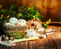 Basket with Easter eggs painted in a circle, spring branch with green leaves,. Wooden orange - brown background Stock Photos