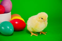 Basket with the Easter eggs and small chicken Stock Images