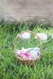 Basket of easter eggs standing on fresh grass Royalty Free Stock Photos