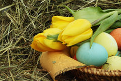 Basket of easter eggs and tulips on hay Stock Image