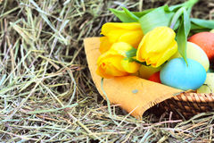 Basket of easter eggs and tulips on hay Royalty Free Stock Photo