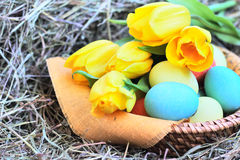 Basket of easter eggs and tulips on hay Stock Images