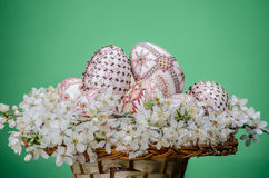 Basket with easter painted eggs and plum cherry flowers Royalty Free Stock Photography