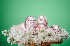 Basket with easter painted eggs and plum cherry flowers Royalty Free Stock Images