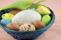 Basket with Easter quail eggs and yellow tulip on pale pink background. Royalty Free Stock Image