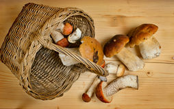 Basket with edible boletus Royalty Free Stock Image