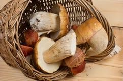 Basket with edible boletus Stock Photo