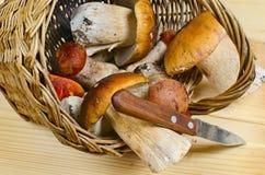 Basket with edible boletus Royalty Free Stock Photo