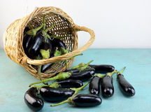 Basket with eggplants Stock Photography