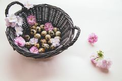 Basket with eggs and flowers. royalty free stock photography