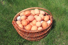 Basket of eggs. In the green grass Stock Photo