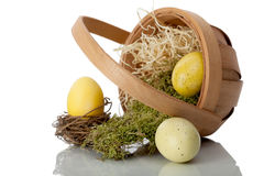 Basket of eggs on its side with moss and straw Stock Photos