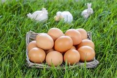 Basket of eggs standing on fresh grass stock image