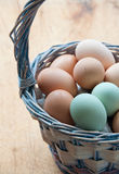 Basket of farm fresh eggs on a table. A basket of farm fresh chicken eggs sits on a wooden table. In the basket are brown eggs from Rhode Island Reds and green Royalty Free Stock Photo